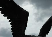 Bronze - Adler